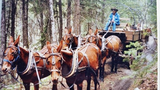 1991 Support wagon for the overnight pack trip from Pritchard to the Falkland rodeo.