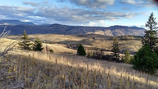 Grassland trails above the South Thompson River valley